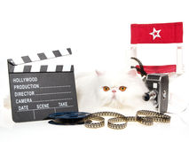 White Persian with movie props on white background Stock Photos