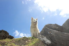 White pet dog happy outdoors sunny day outside in nature Stock Photos