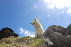 White pet dog happy outdoors sunny day outside in nature Stock Photo