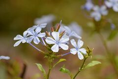 White Petal Flower Stock Photo