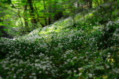 White Petal Flowers on Field With Green Trees at Daytime Stock Image
