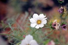 White Petaled Flower Stock Images