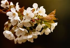 White Petaled Flower Stock Photography