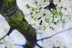 White Petaled Flower in Closeup Photography Stock Images