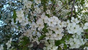 White Petaled Flowers at Daytime Royalty Free Stock Photo