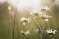 White Petaled Flowers during Daytime Royalty Free Stock Images