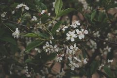 White Petaled Flowers Selective Focus Photography Stock Photography