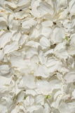 White petals. Abstract background of petals apple tree Stock Photos