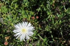 White petals royalty free stock image