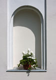 White petunia in a flower pot. And arch in the wall in the background Stock Photography