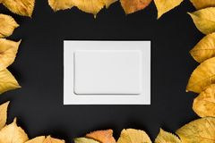 White photo frame on a black background with autumn leaves of ye Royalty Free Stock Image