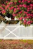White picket fence. With fallen blossom Stock Image