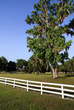 White Picket fence. Landscape view of a white picket fence on a large farm/ranch royalty free stock image