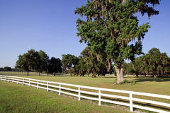 White Picket fence. Landscape view of a white picket fence on a large farm/ranch royalty free stock photography