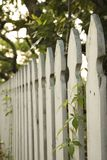 White picket fence. stock image
