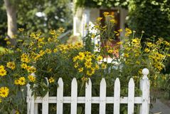 White Picket Fence. A beautiful summer scene in suburban America. White picket fence with yellow daisies growing in the front yard Stock Photography