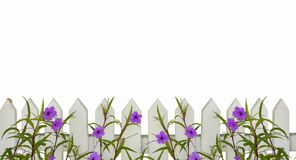 White picket fence border with purple flowers border isolated on white with space for copy above - will tile horizontally. A White picket fence border with stock photography