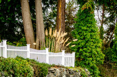 White picket fence with cattails Royalty Free Stock Photo