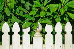 White picket fence overgrown by a big bush royalty free stock images