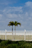 White picket fence and palm trees Royalty Free Stock Photo