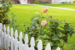 White picket fence and roses Stock Images