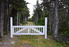White picket fence wooden gate. In a pinafore forest area stock photo