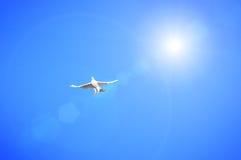 White pigeon Royalty Free Stock Image