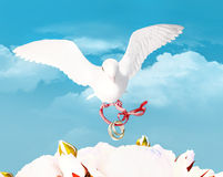 The white pigeon in the blue sky, holds wedding rings. Stock Images