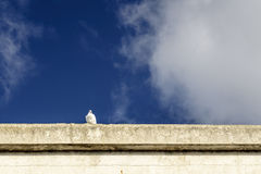 White pigeon on blue sky. A small pigeon on a wall with the background of blue sky Stock Image