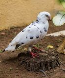 White pigeon on flowering background Royalty Free Stock Photo