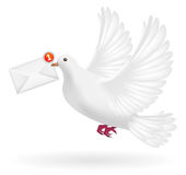 White pigeon flying with envelope mail message Stock Photos