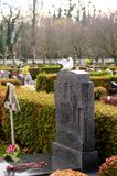 White pigeon and Marble tombstones in French cemetery Royalty Free Stock Photography