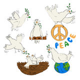 White pigeon and olive branch - symbol of peace Stock Images