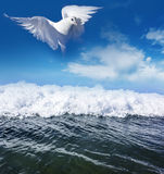 White pigeon and sea Royalty Free Stock Image