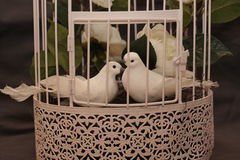 White pigeons in love in a cage. Royalty Free Stock Photos