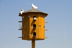 White pigeons sitting on a dovecote Royalty Free Stock Image