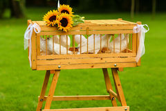 White pigeons in a wooden cage decorated with sunflowers Royalty Free Stock Images