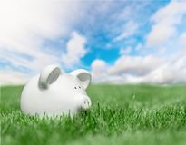 White piggy bank in green grass. White bank pig piggy close up background money Royalty Free Stock Image