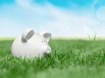 White piggy bank in green grass. White bank pig piggy close up background money Stock Image