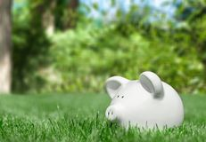 White piggy bank in green grass. White bank pig piggy close up background money Royalty Free Stock Images