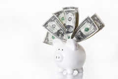 White Piggy Bank with US Dollars. A white ceramic piggy bank with UD dollar bills stuffed into top slot, light grey background Royalty Free Stock Photo