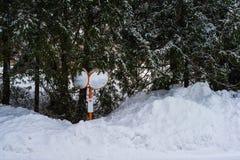 Pile of snow and trees around orange street mirrors. White pile of snow and trees around orange street mirrors Royalty Free Stock Photos
