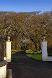 White Pillars and Driveway leading into Forrest. Entrance Gate with White Pillars and Driveway leading into Forrest with Blue sky Stock Images