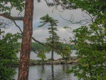 White Pine on Lake Muskoka. Lake view from Old Woman Island in Lake Muskoka in Ontario Canada Stock Photo