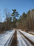 White Pine Road. A White Pine tree stands on the side of a snow covered dirt road Royalty Free Stock Photos