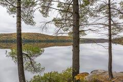 White Pine träd som gränsar en sjö i höst - Ontario, Kanada arkivfoton