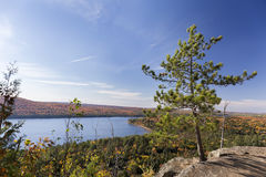 White Pine Tree Overlooking an Autumn Lake - Ontario, Canada Royalty Free Stock Images