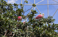 White Pink Birds Among Trees in an Aviary Stock Photo