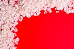 Cherry petals border Stock Images