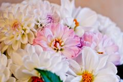 White and pink dahlias bouqet. Close up Royalty Free Stock Image